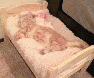 cat, kitten, and bed image