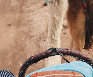 camel, color, and desert image