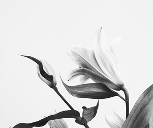 flowers, black, and plants image