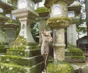 deer, japan, and japanese image