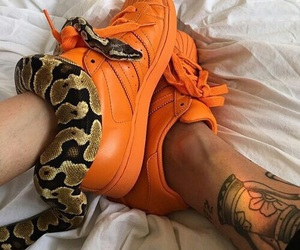 snake, orange, and adidas image