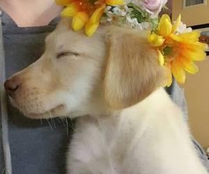dog, filhote, and lovely image