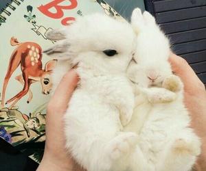 cute, animal, and bunny image