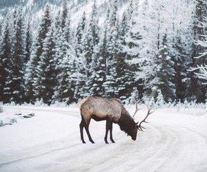 dark, deer, and nature image