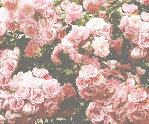 backround, flowers, and wallpaper image
