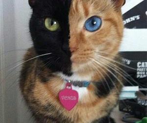 cat and Venus image