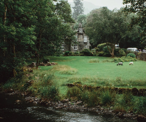 home, nature, and green image