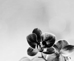 beautiful, black&white, and flowers image