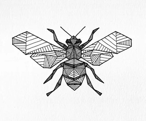 bee, drawing, and insect image