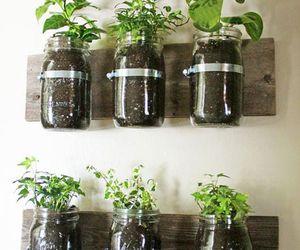 plants, diy, and herb image