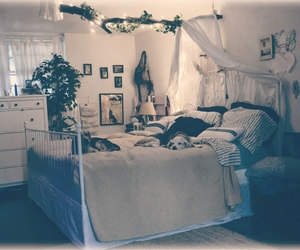 beagle, bedroom, and forest image