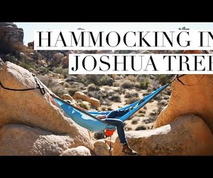 joshua tree, travel, and video image