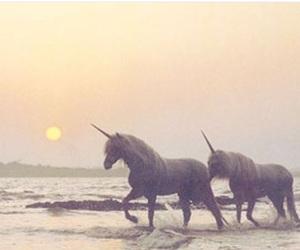 unicorn, beach, and sea image