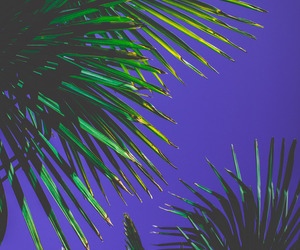 palms, sky, and wallpaper image