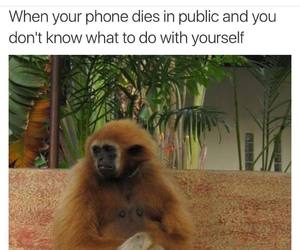 dies, phone, and funny image