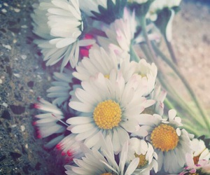 flowers, pale, and spring image