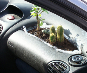 cactus, plants, and car image