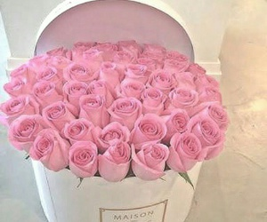 pink, roses, and love image