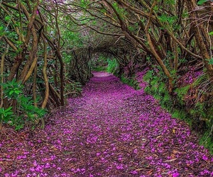 nature, purple, and flowers image