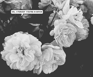 bitch, black and white, and flowers image