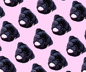 pug and wallpaper image