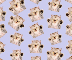 background, kitties, and cats image