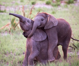 animals, elefant, and cute image