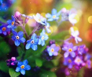 beautiful, blue, and flower image