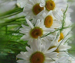 flowers, spiring, and white image