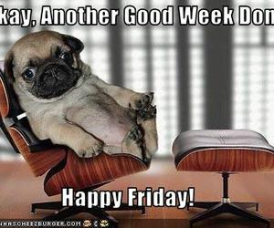 dog and friday image