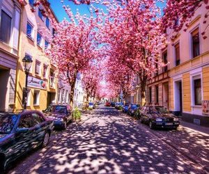pink, street, and flowers image