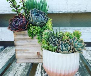 green, plantas, and plants image