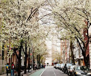 spring, tree, and street image