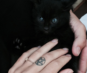 black cat, tattoo, and witch image