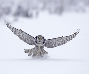 owl and hd wallpapers image
