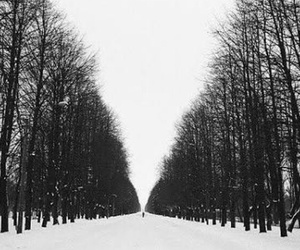snow, tree, and black and white image