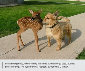 funny, dog, and deer image