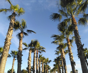 algarve, palmtrees, and portugal image