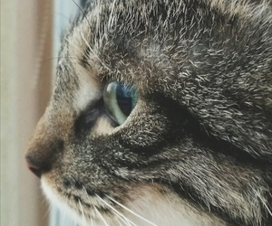 cat, deep, and focus image