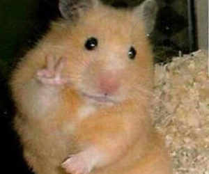 funny, reaction, and hamster image