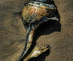 beach, color photography, and detail image