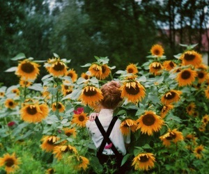 flowers, sunflower, and indie image