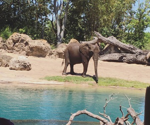 aesthetic, africa, and african elephant image