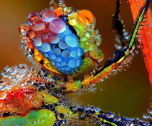 cool, dragonfly, and insect image