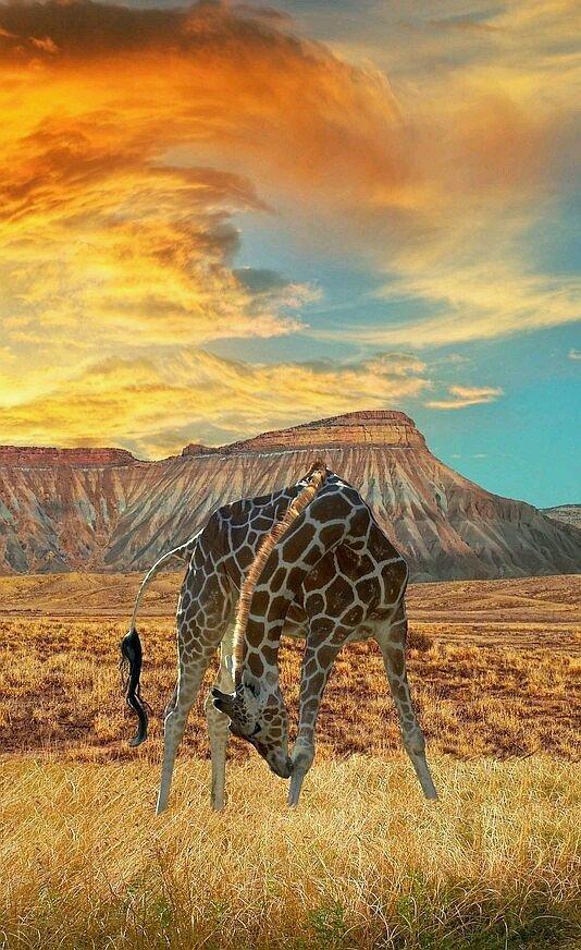 giraffe, animal, and nature image