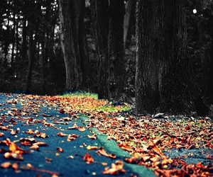 autumn, leaves, and wallpaper image
