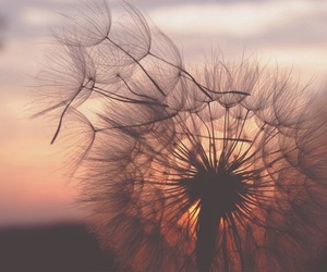 flowers, dandelion, and sunset image