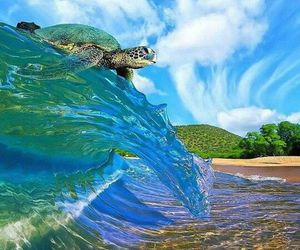turtle, beach, and wave image