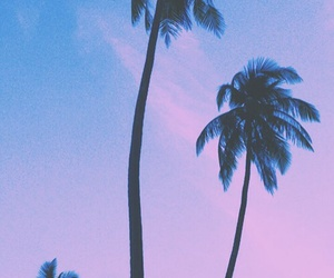 palms and wallpaper image