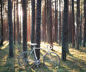 beautiful, bike, and forest image